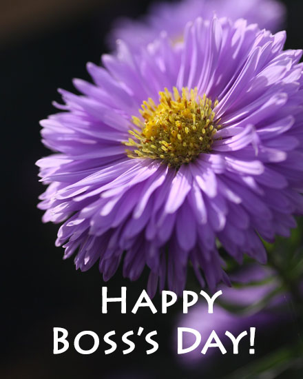 holiday card boss day purple aster