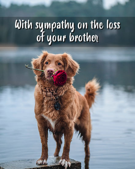 sympathy card with sympathy on the loss of your brother