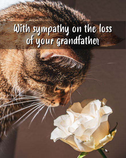 sympathy card with sympathy on the loss of your grandfather