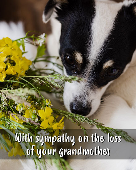 sympathy card with sympathy on the loss of your grandmother
