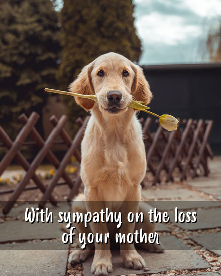 sympathy card with sympathy on the loss of your mother