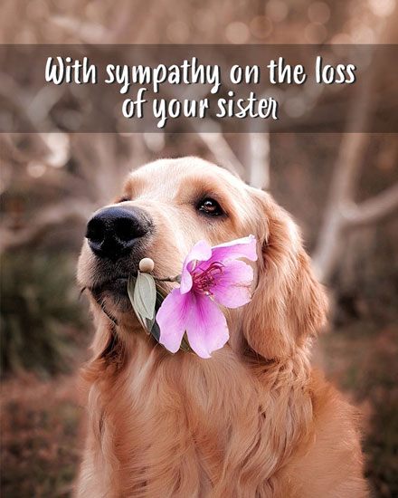 sympathy card with sympathy on the loss of your sister