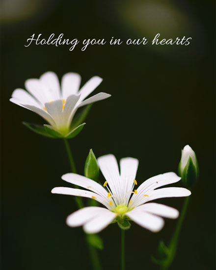 sympathy card white daisies