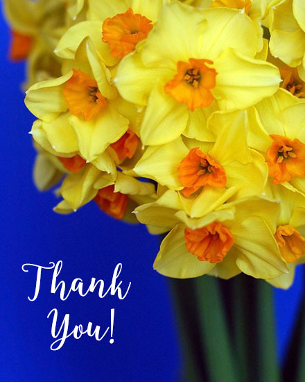 thank you card daffodils