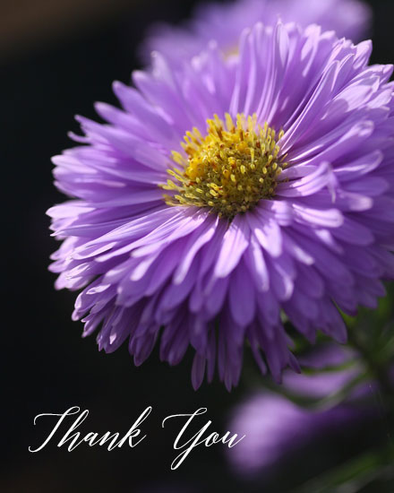 thank you card purple aster