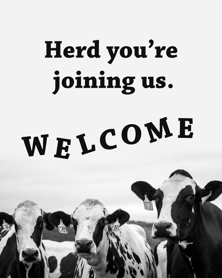 welcome card herd you're joining us cows