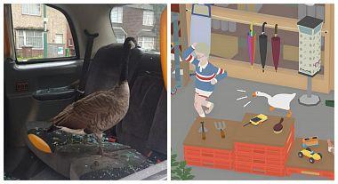 husa-po-vzoru-hry-untitled-goose-game-terorizovala-obyvatele-mesta