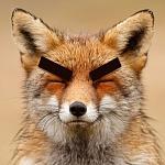 BigBrowFox