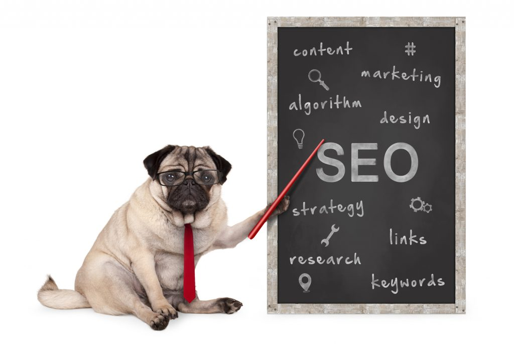 A pug in glasses and a tie shows tips for SEO on a blackboard