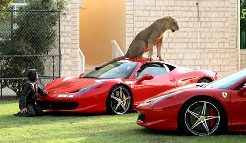 Gallery: Exotic Animal Collection Meets Exotic Car Collection!