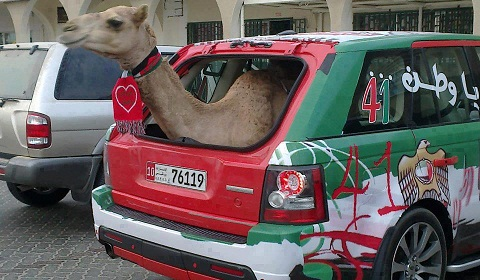 Range Rover Sport Supercharged Provides Luxury Camel Transportation