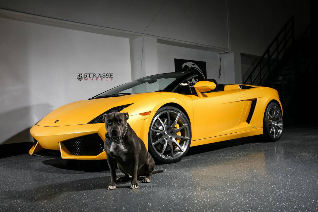 giallo midas lamborghini gallardo spyder with strasse wheels gtspirit. Black Bedroom Furniture Sets. Home Design Ideas