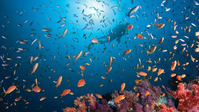 Four Seasons Resort Maldives Kuda Huraa Marine Life