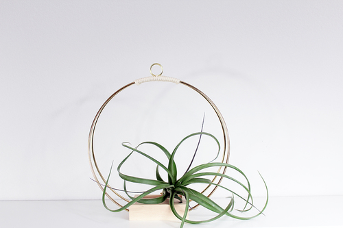 Plant Hanger (Medium)