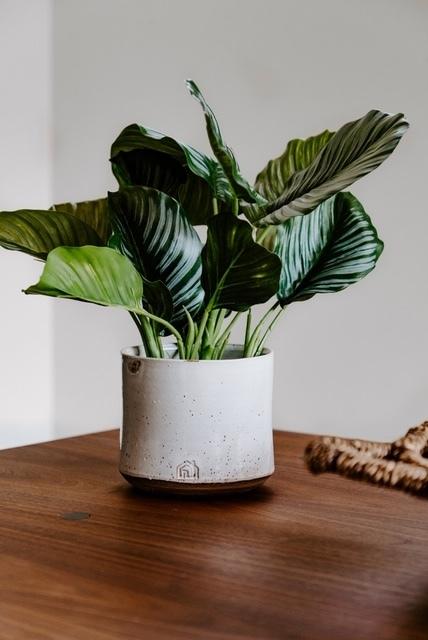 Medium Planter