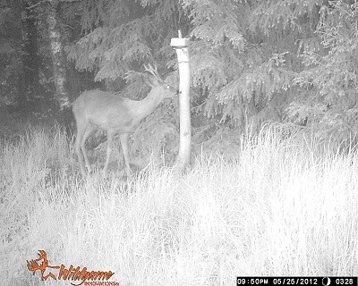 A shot from a trail camera with IR flash