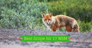 Best Scope for 17 WSM