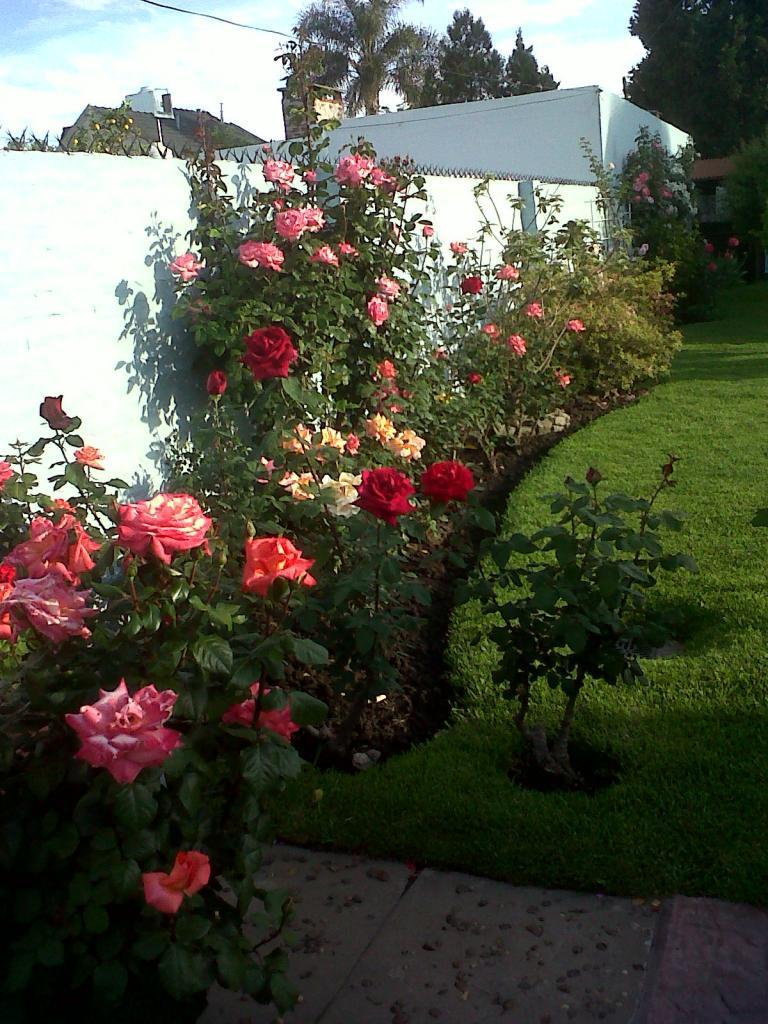 Primavera en el jardin de mi casa for Jardines de primavera
