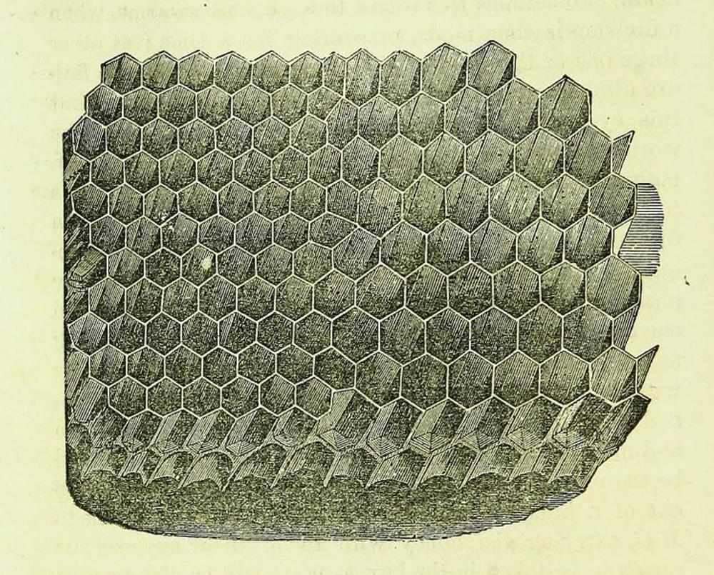 Honeycomb_WikimediaCommons7i28.PNG