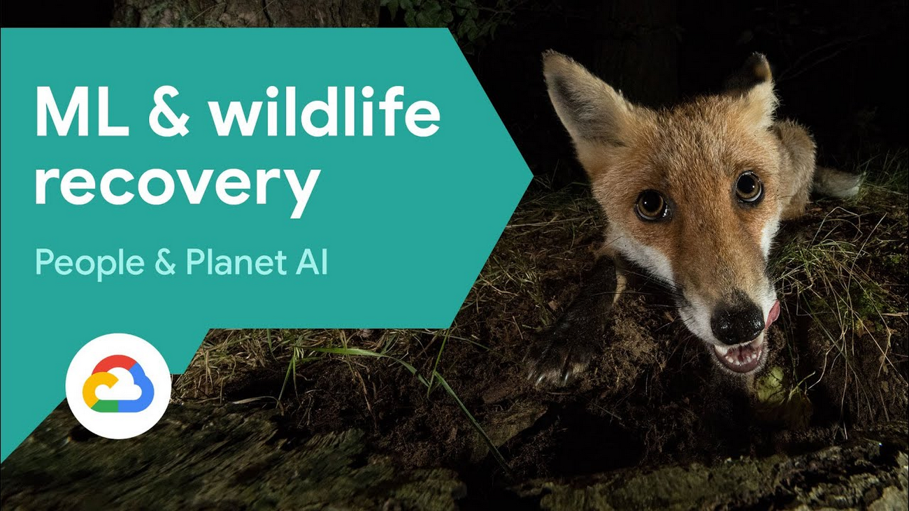 Recovering global wildlife populations using ML