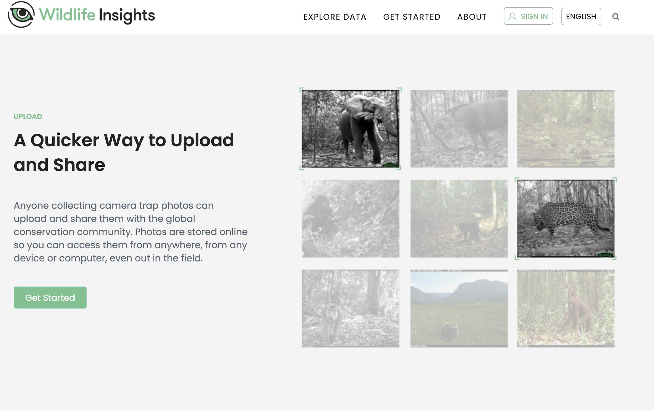 Wildlife Insights. Homepage