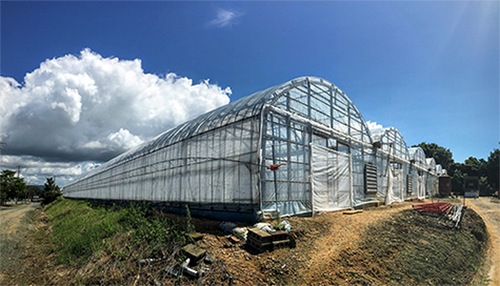 cucumber-farmer-114kzz.PNG