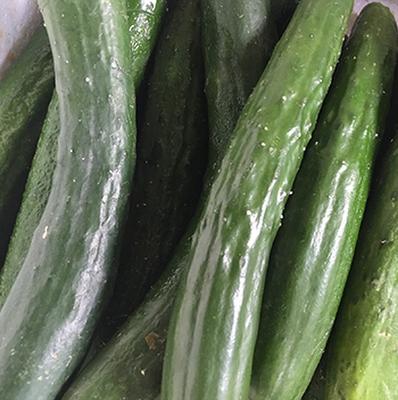 cucumber-farmer-1ltqg.PNG