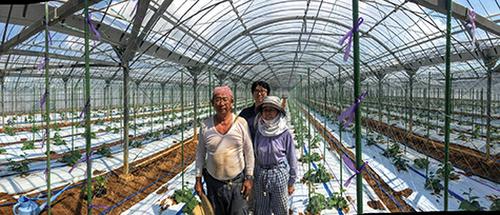 cucumber-farmer-3ux78.PNG