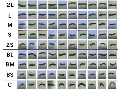 cucumber-farmer-96y1f.PNG