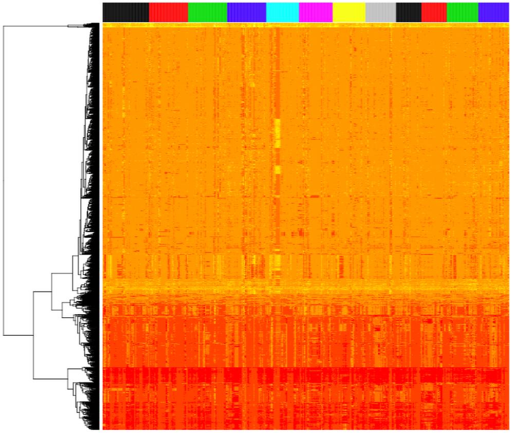 rice_genomes_plot.png