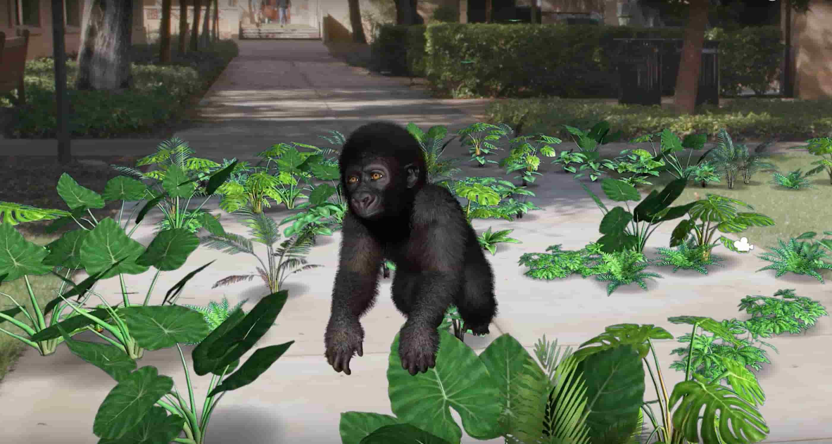 Gorillas-EllenDegeneresWildlifeFund