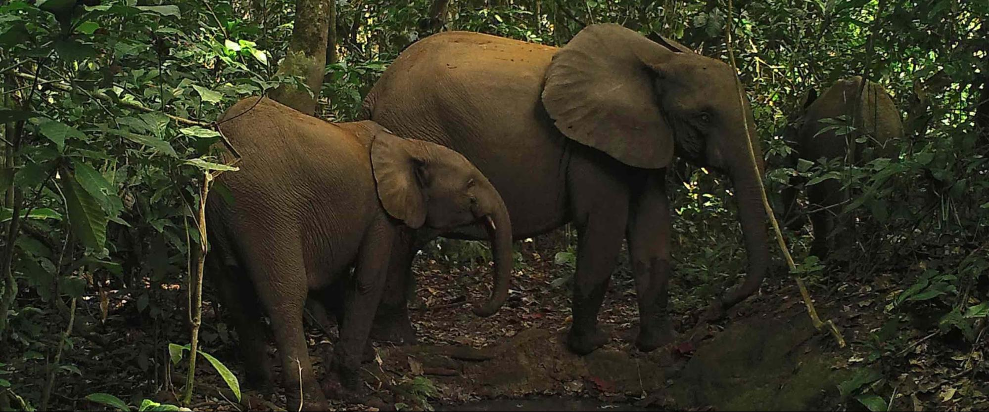 How ZSL uses ML to classify gunshots to protect wildlife