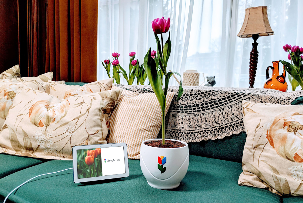 Google Tulip, alongside a Google Home Hub on a couch