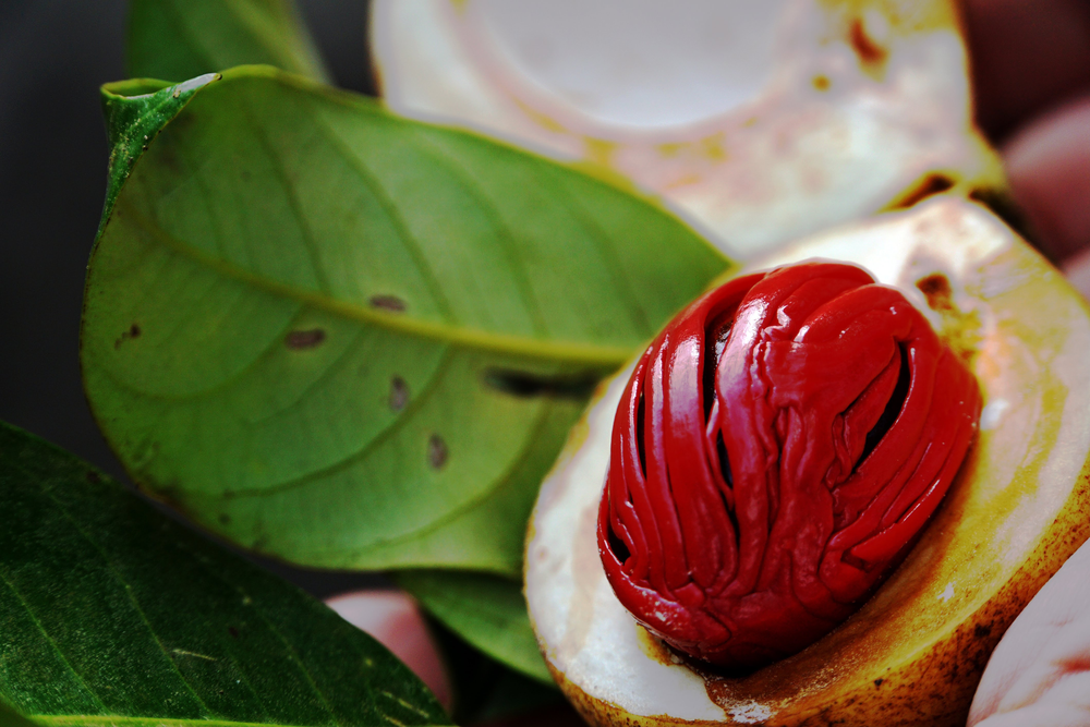 A close-up photo of nutmeg, once one of the most prized spices in the world.
