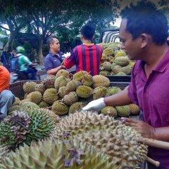 Durians from Medan