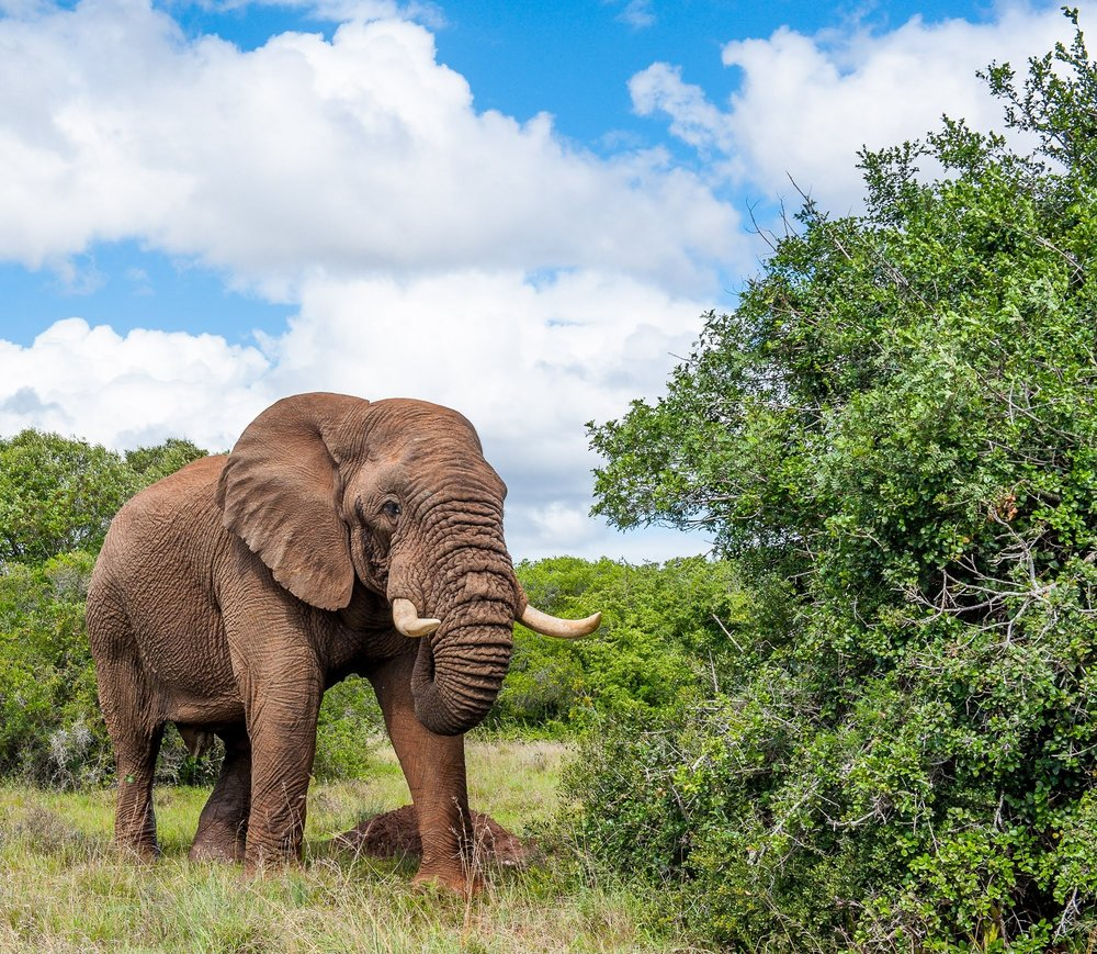 Addo Elephant National Park, Eastern Cape, South Africa, South African Tourism