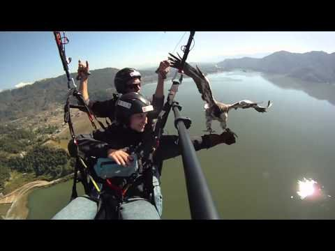 Parahawking in Nepal - The Best of 2010/2011