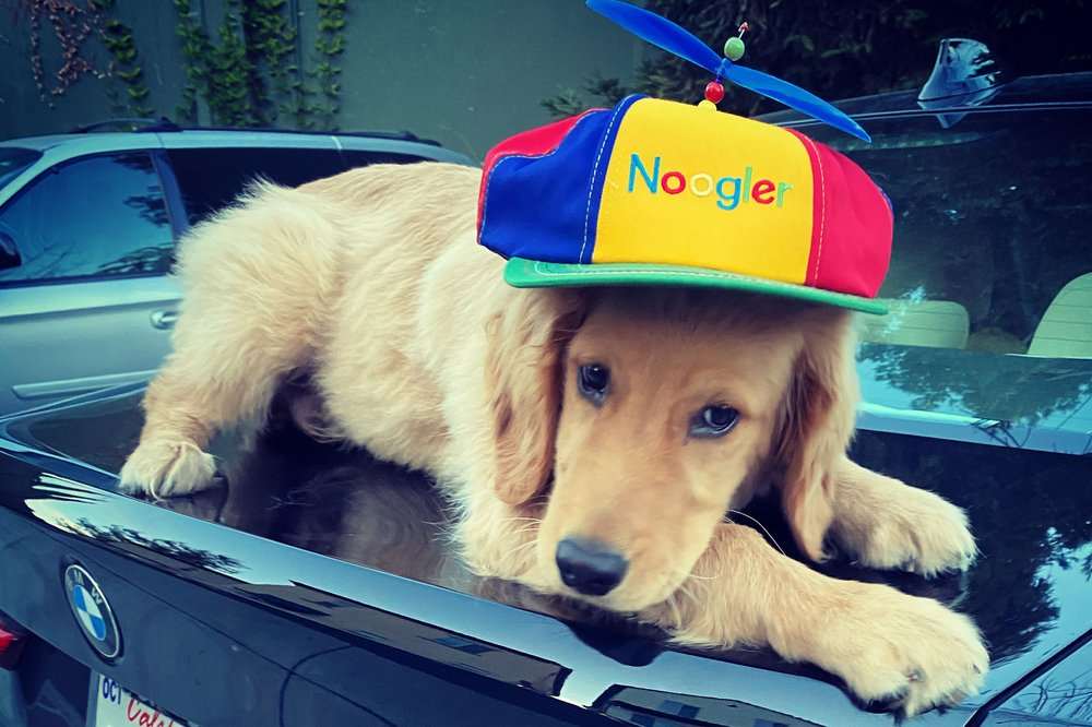 A golden retriever puppy lays on the trunk of a car while wearing a Noogler hat.