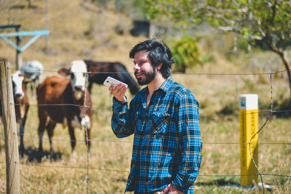 A man wearing a blue shirt in a rural part of Brazil speaks to his phone, with cows in a field in the background