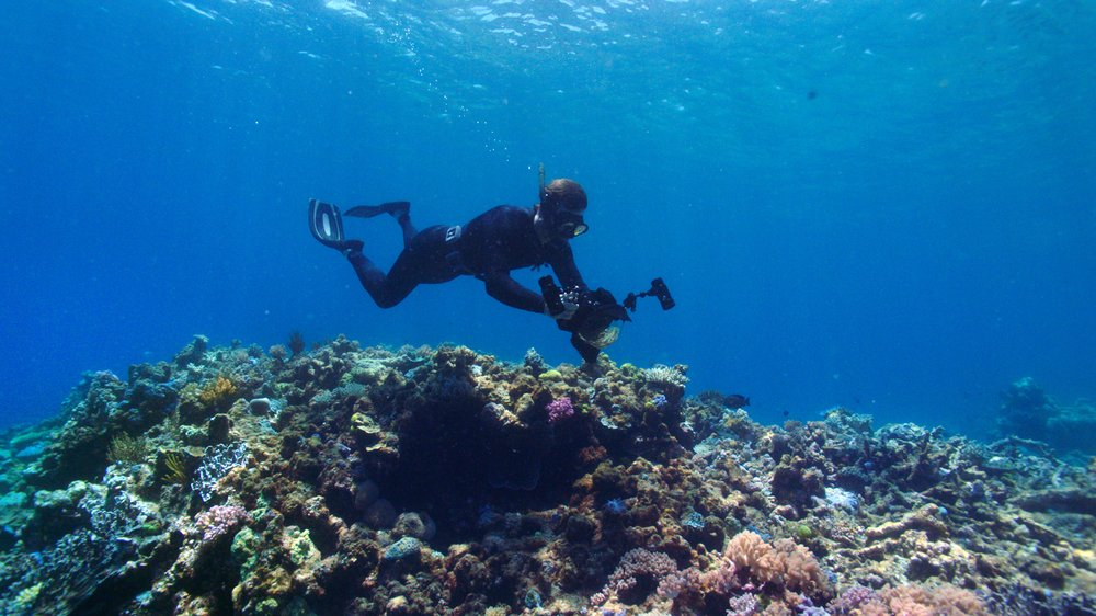 A marine biologist swims over coral formations.