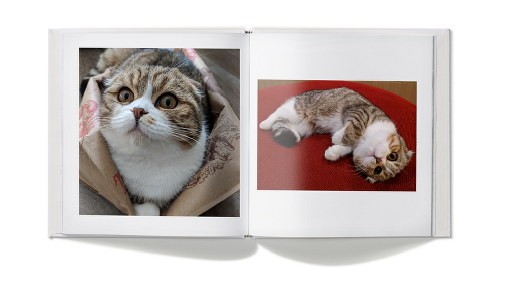 cat photo book