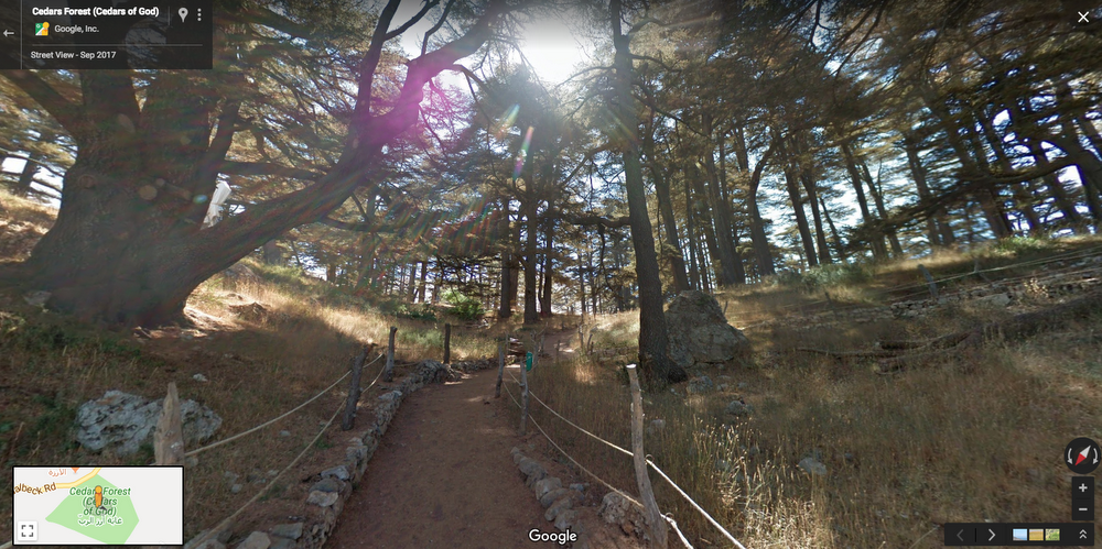 Cedars Forest (Cedars of God).png
