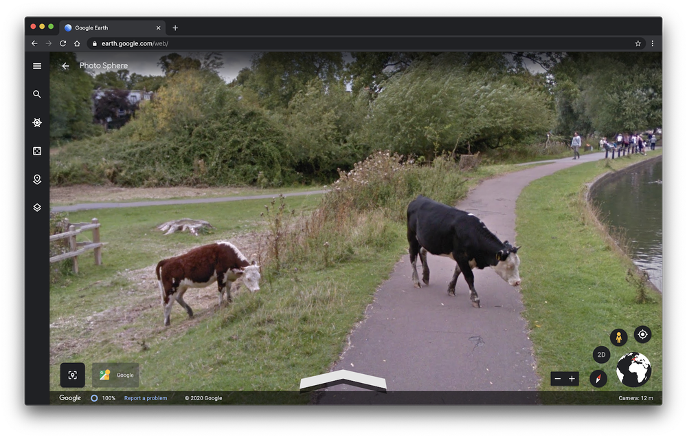 Cows in Google Earth imagery