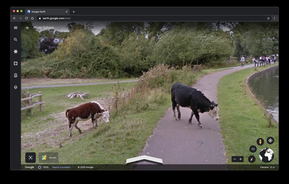 Mucche nelle immagini di Google Earth