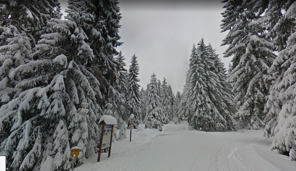 Image showing a forest and trees all covered in snow.
