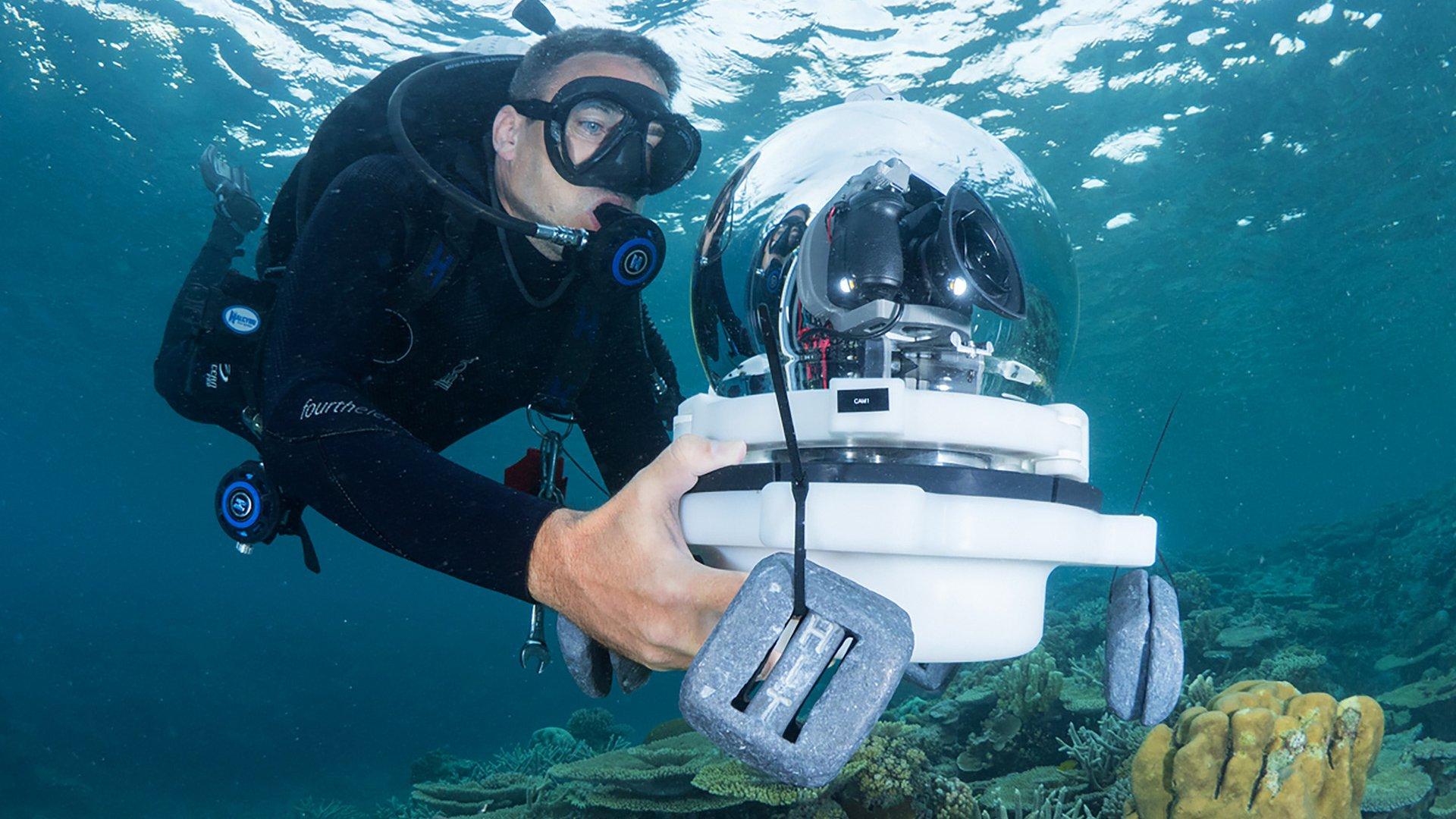 Google Keyword Chasing Coral Image 005.jpeg