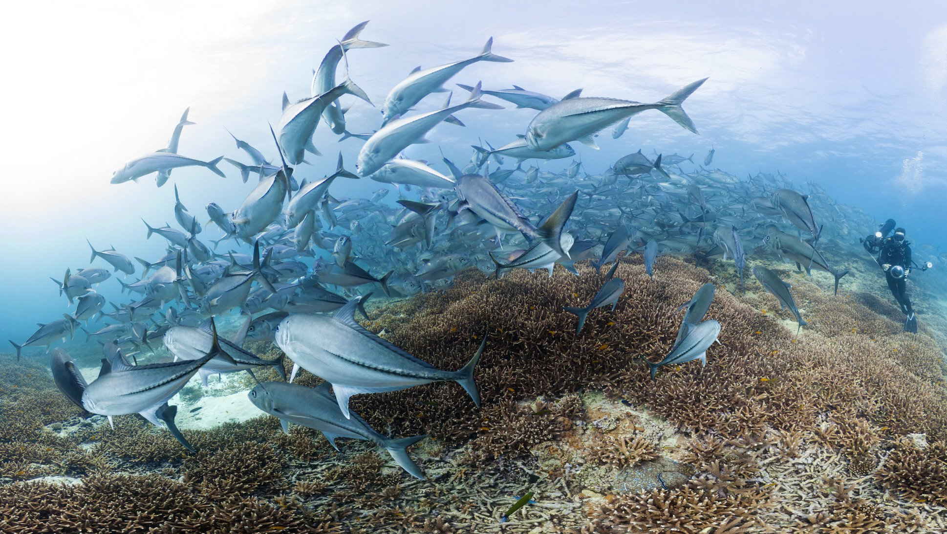 Google Keyword Chasing Coral Image 002.jpg