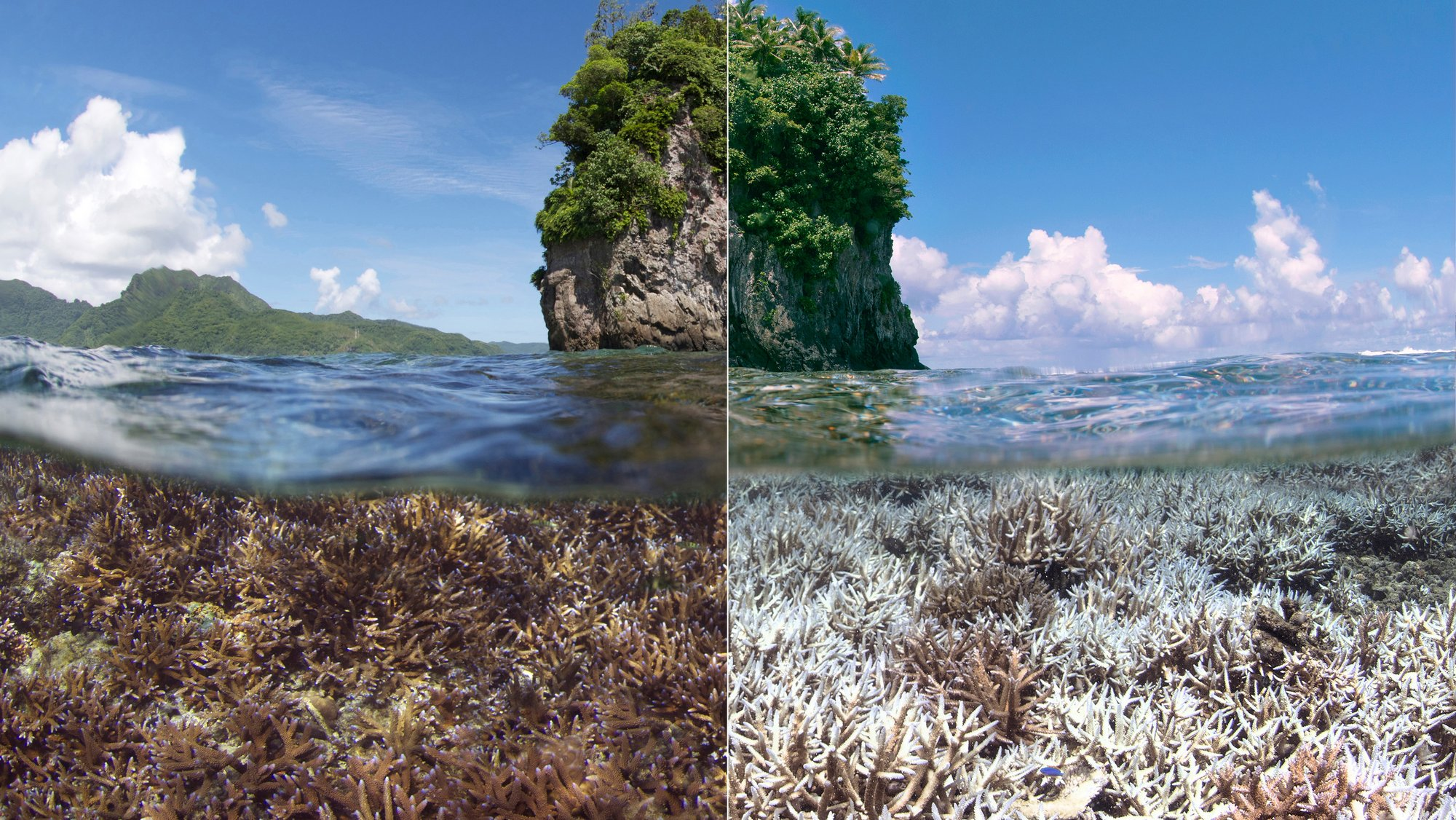 Google Keyword Chasing Coral Image 003.jpg