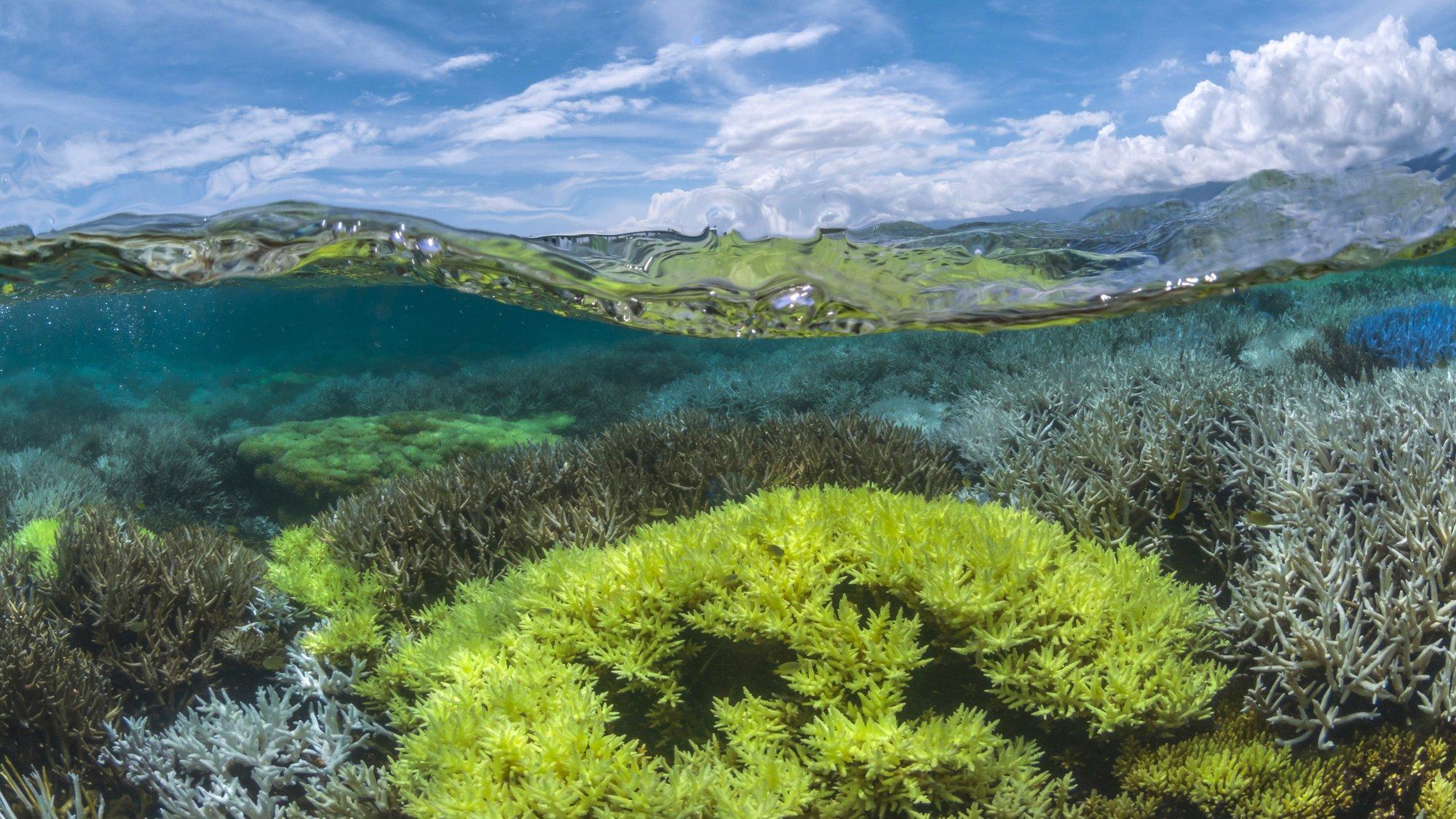 Google Keyword Chasing Coral Image 004.jpg