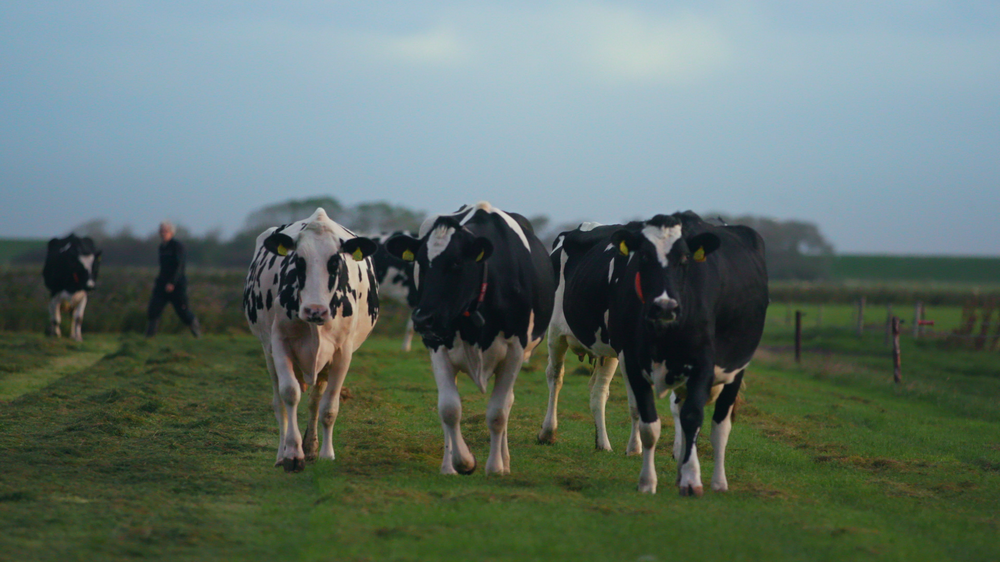 Using TensorFlow to keep farmers happy and cows healthy
